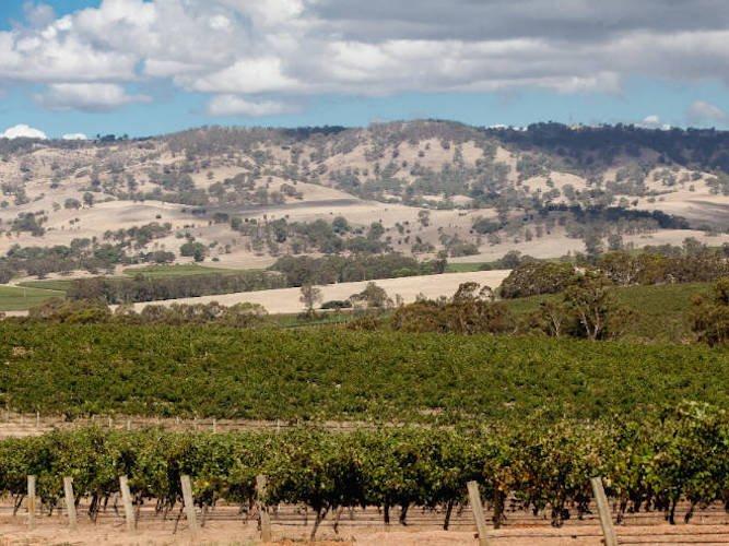 Barossa Valley vineyards in summer